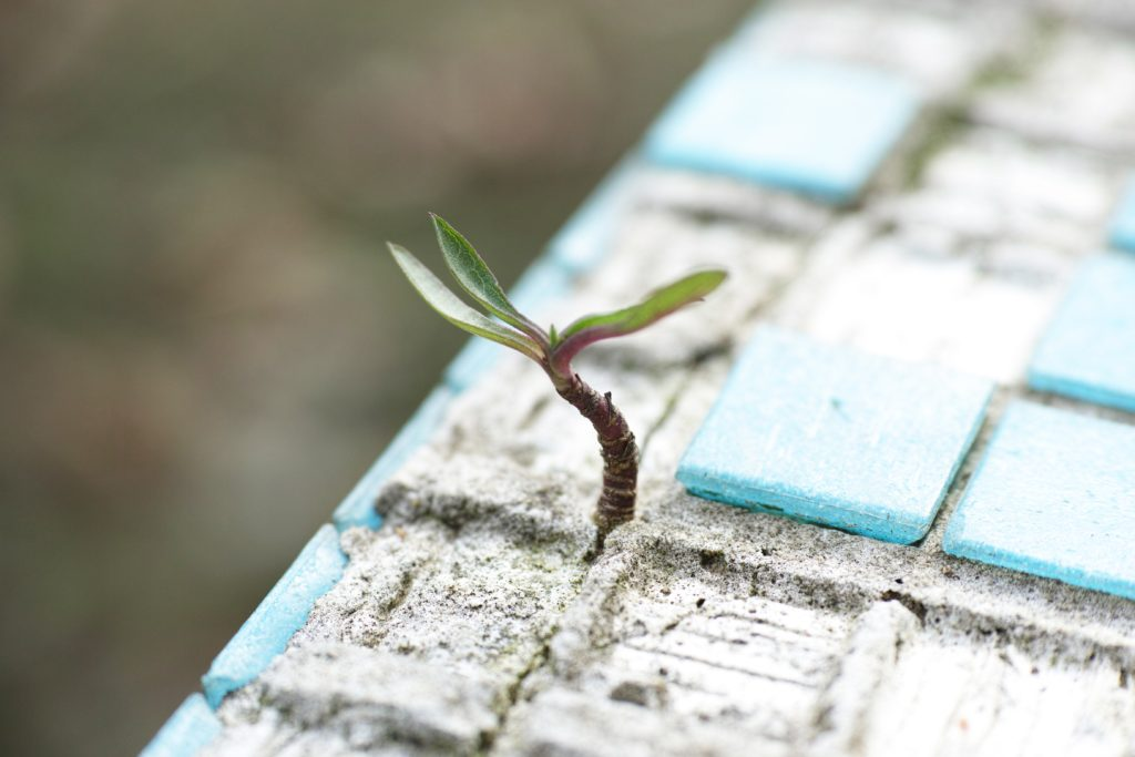 Photo of a plant sprouting out of cement