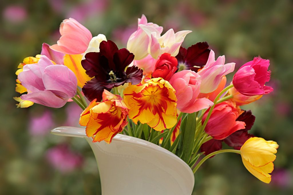 Photo of a white vase filled with differently colored tulips