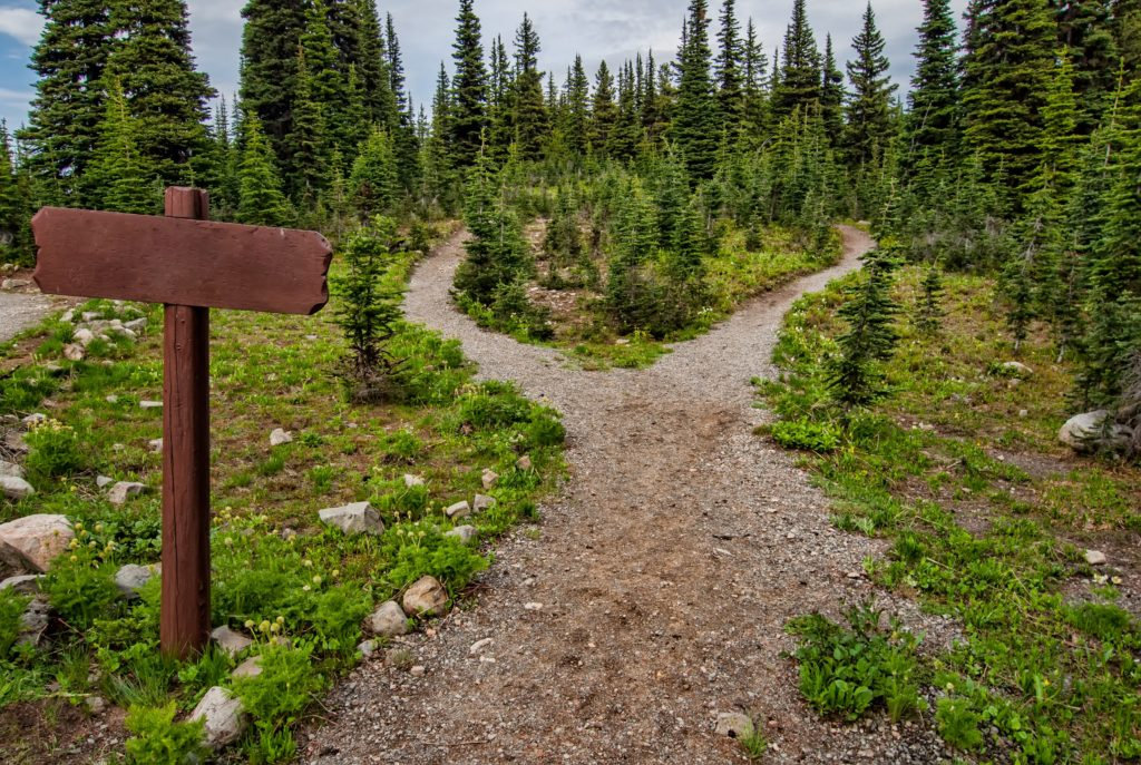 Photo of a gravel path diverging into an evergreen forest